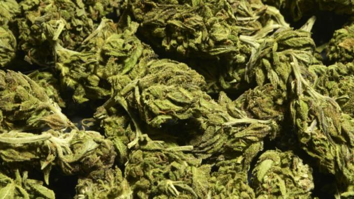 FCC_Charolettes_Web_Marijuana
