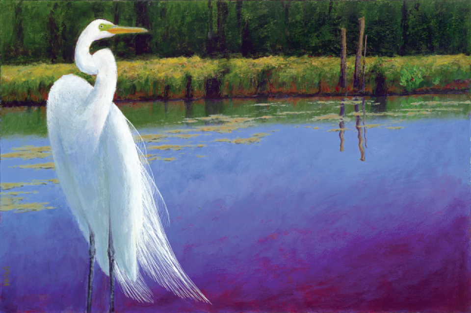 anthony_whiting-great-egret_in_best_sunday_plumage