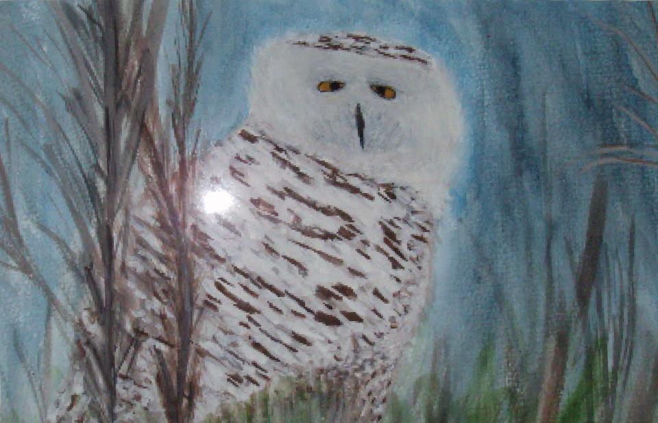 patricia_andrew-snowy_owl