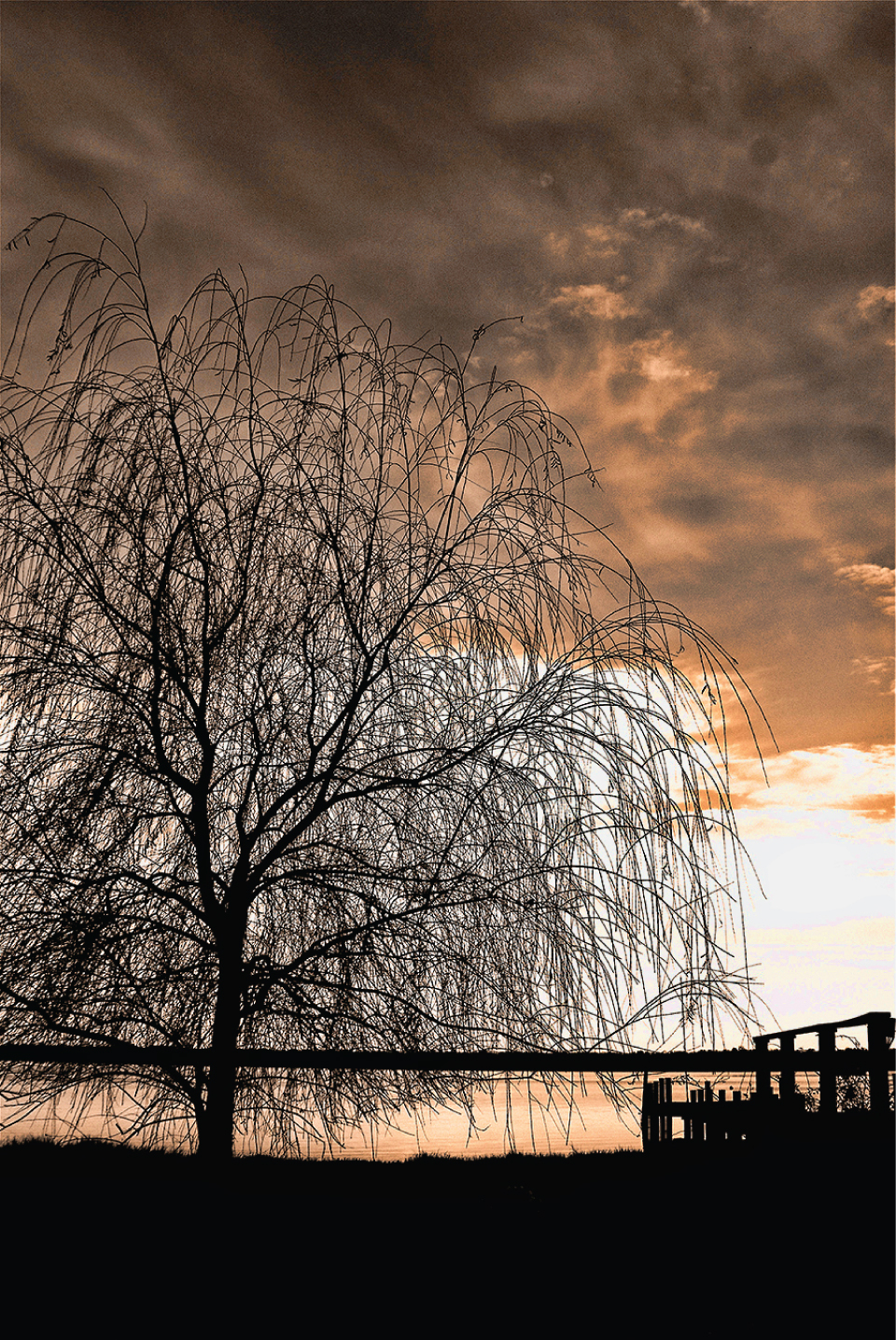 cher_brown-winters_willow