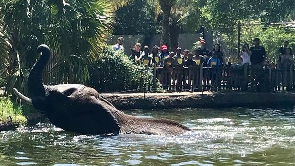 Jacksonville Zoo Explains Safety Procedures Following Brief Escape Of Michael Jackson's Elephant